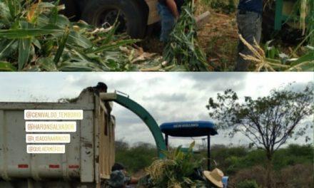 Prefeitura de Prata auxilia agricultores na produção da silagem