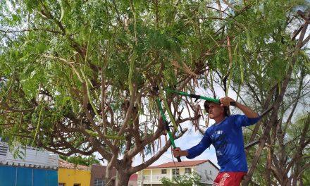 Prefeitura de Prata realiza serviço de poda de árvores na cidade
